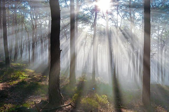 Erleuchtung im Wald