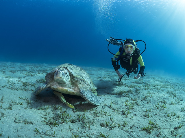 Junior Open Water Diver with Turtle