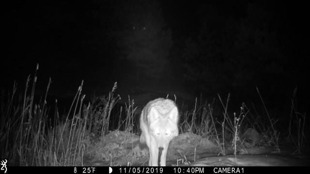 Bobcat Ridge Remote Cameras
