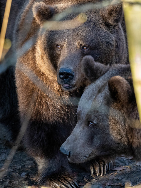 what these two bears watching?