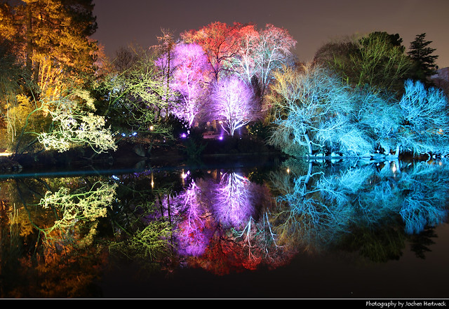 Enchanted Forest Reflection, Winterlichter, Palmengarten, Frankfurt, Germany