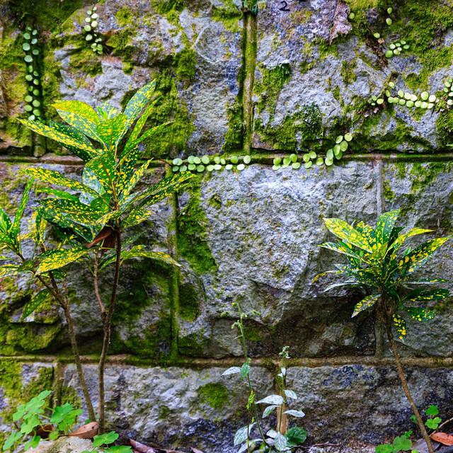 Green & Wall