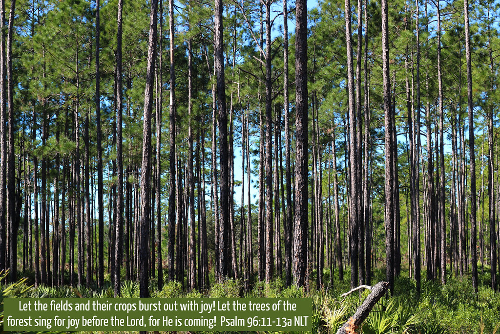 Julington Durbin Creek Nature Preserve, Jacksonville, Florida