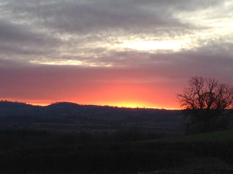 Sunrise, Mistletoe, Snowdrops