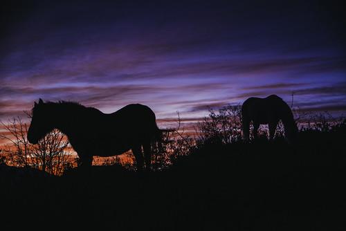 sunset catalunya cheval horse pentax pyrénéesorientales payscatalan