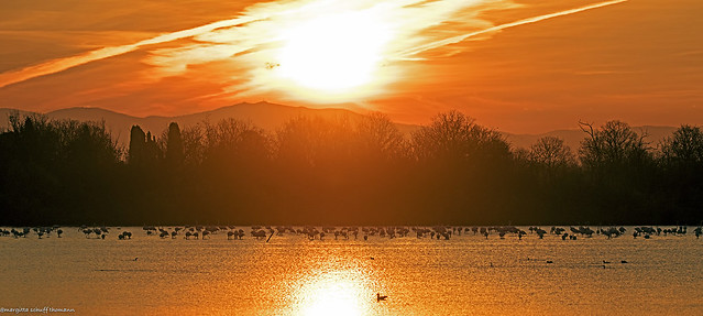 fenicotteri all'alba, flamingos at sunrise ..