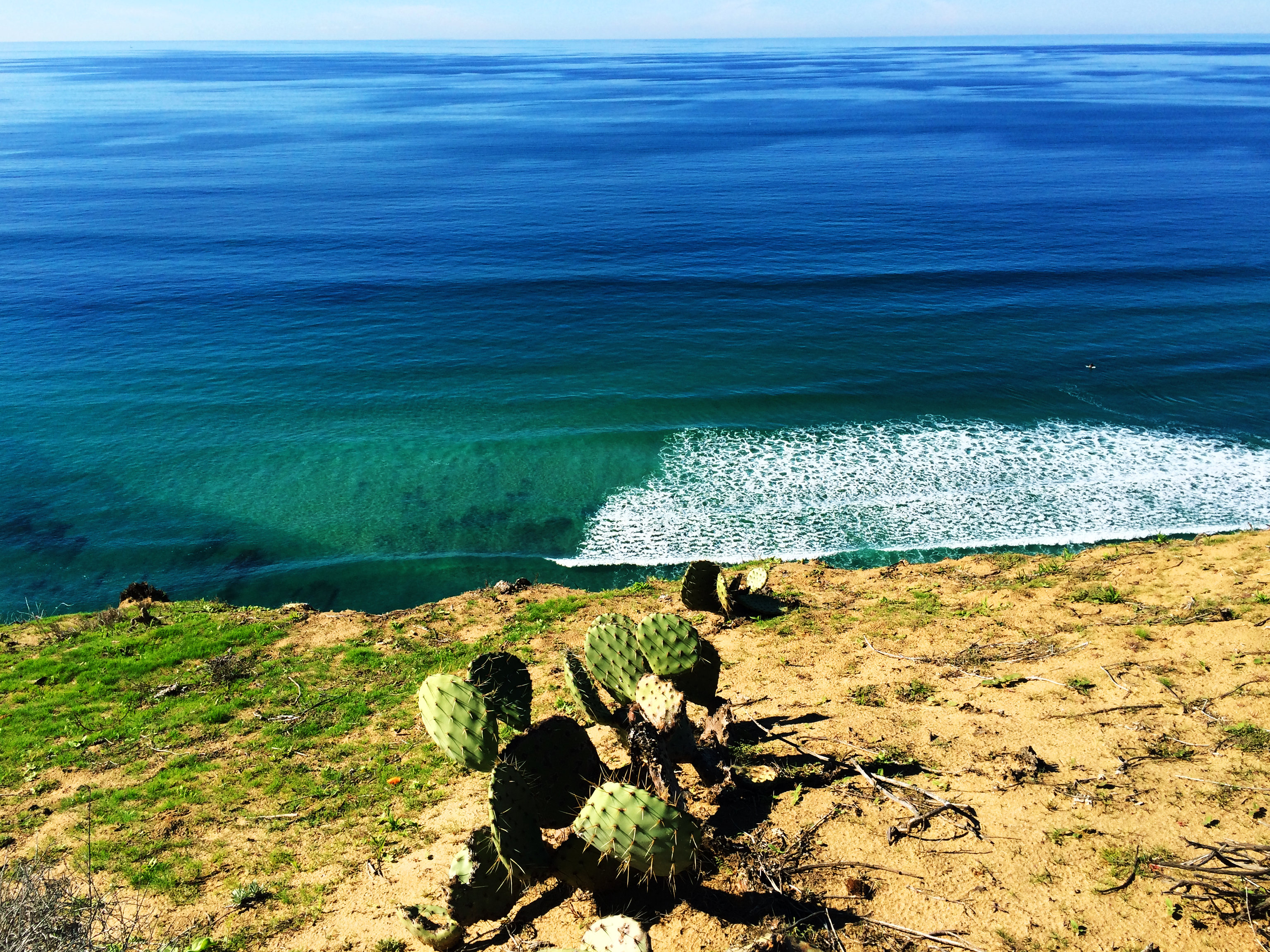Torrey Pines State Natural Reserve, Southern California