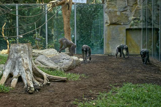 Die Affen sind unterwegs ...