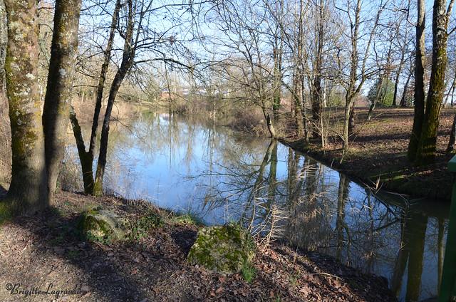 Lumière et ombres sur les étangs