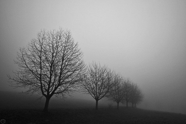 neverlone trees 01.01.2020