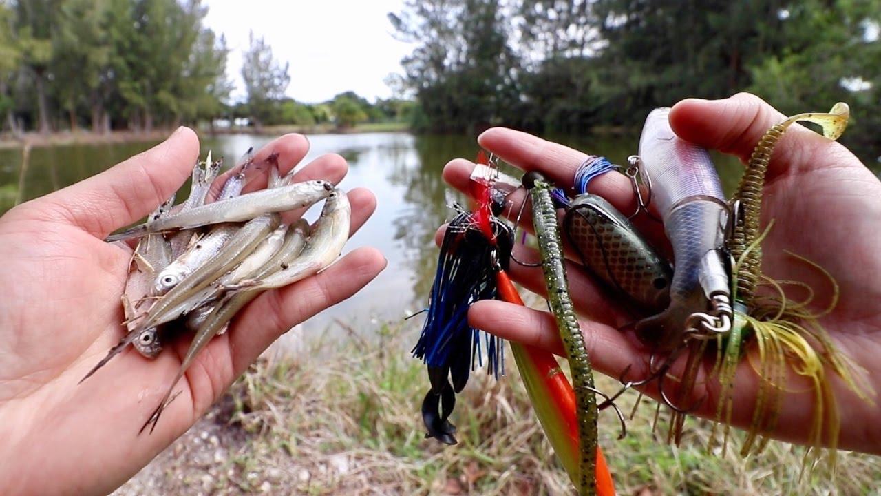 ナマズの最高の釣り餌