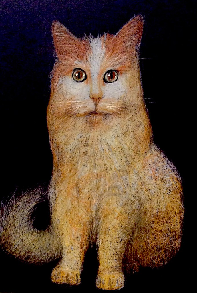 Cat Portrait. Coloured pencil drawing on black card by jmsw.