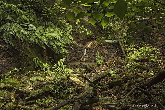 Nuestra selva II
