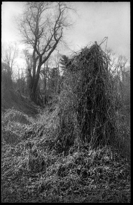 dormant kudzu, bare trees, winter landsape, Asheville, NC, Kodak Retina IIIc, Kodak Tri-X 400, Moersch Eco developer, 1.7.20