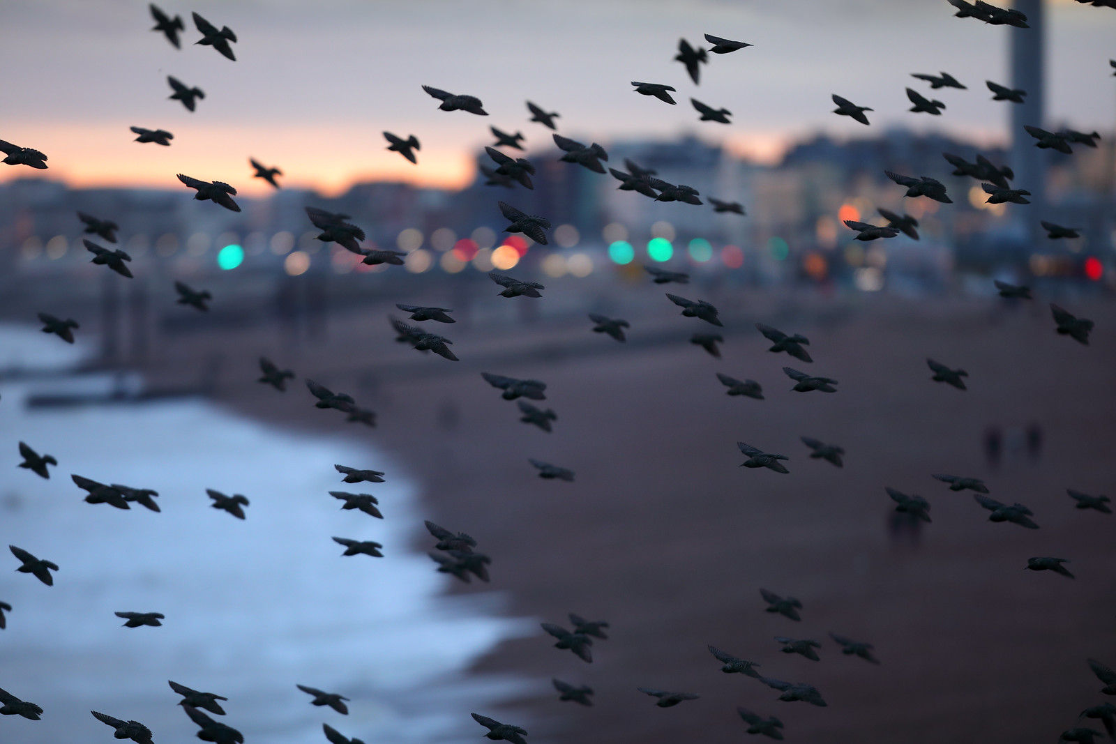 Starlings and Brighton Seafront