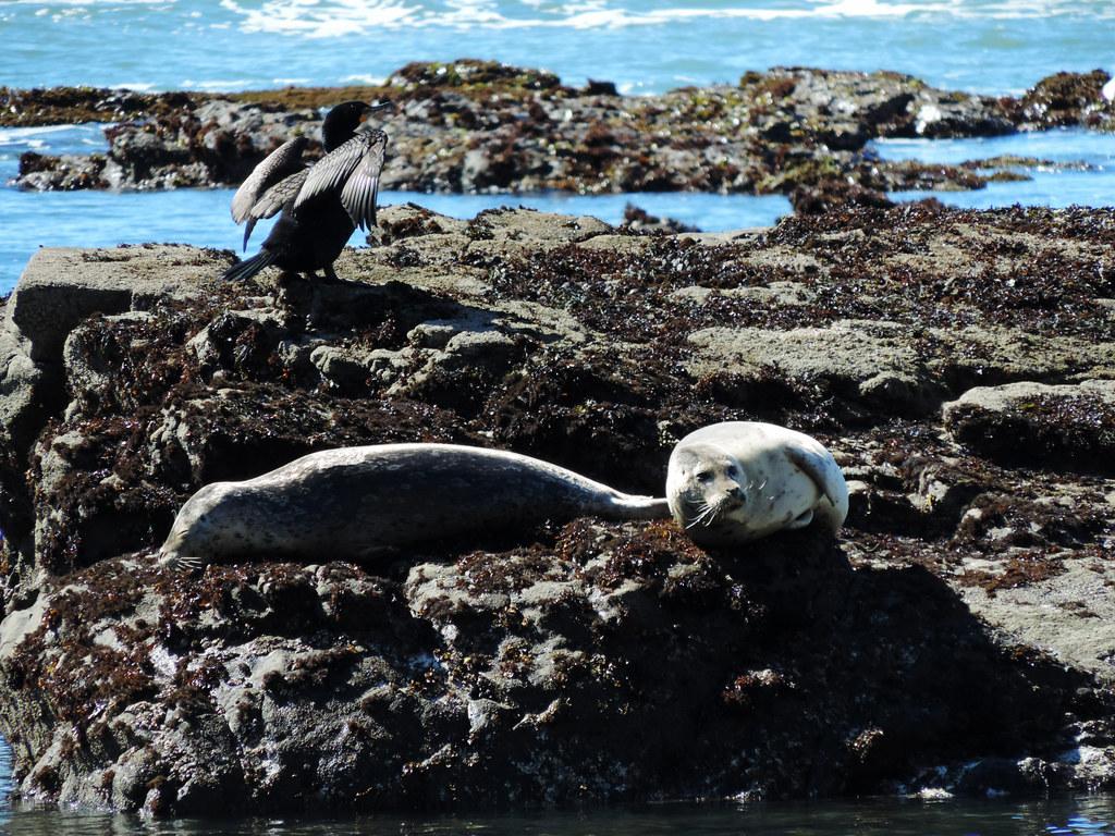 Best Coastal Hikes In California: Pillar Point Bluff, Half Moon Bay, California