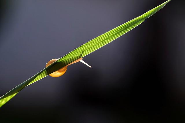 J'aimerais bien traverser cette année avec la même aisance que cette escargot sur sa brindille d'herbe...
