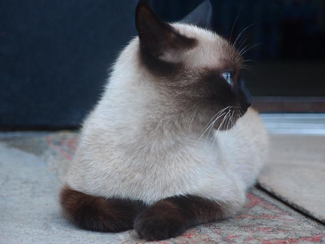 Pensive cat