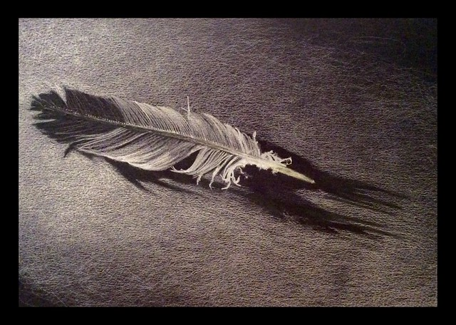 Wood pigeon Feather. White pencil only drawing on black card by jmsw.