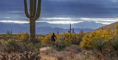 Mountain Bikers On Desert Trail In North Scottsdale, AZ