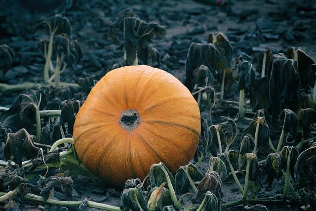 when it was pumpkin time