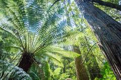 Mavista trail - Bruny Island
