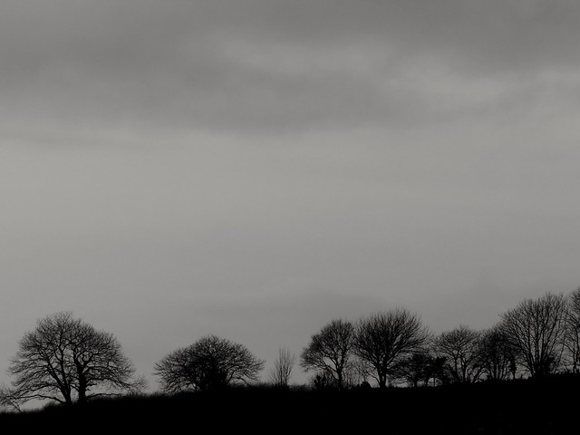 Même en hiver les arbres sont beaux...even in winter trees are beautiful