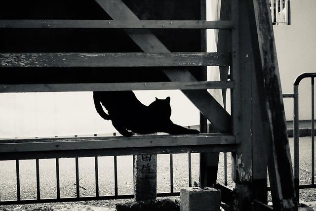 Today's Cat@2020-01-11