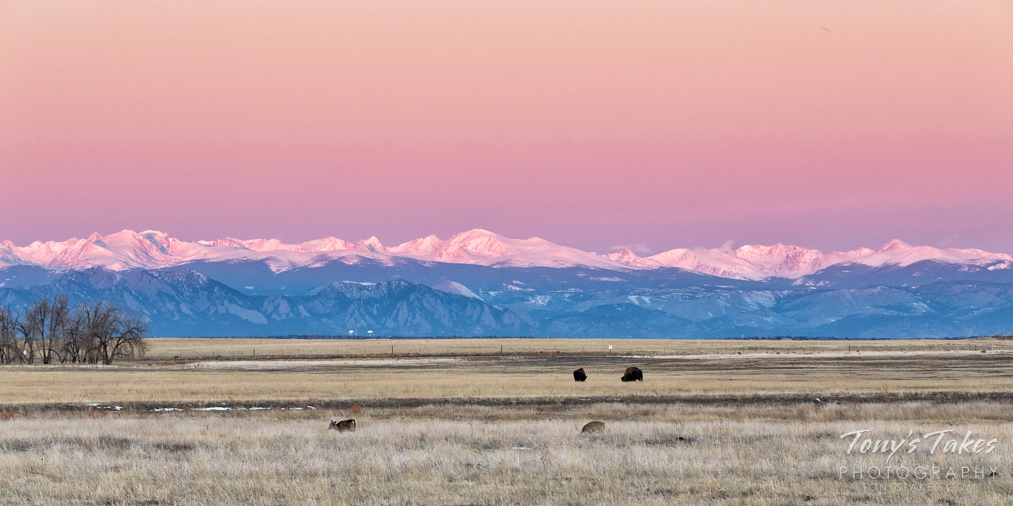 Bison and deer graze on the plains while the early morning sun creates a beautiful alpenglow on the mountains. (© Tony's Takes)