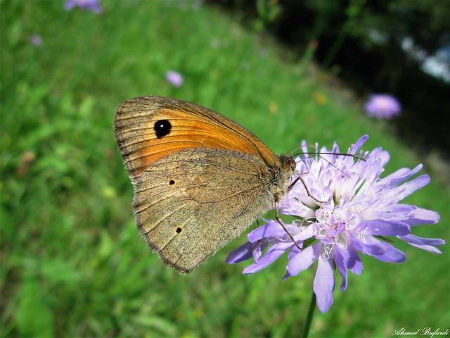 Butterfly 1922