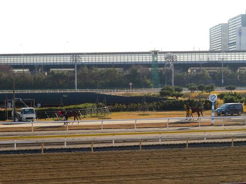 船橋競馬場の内馬場を通って引き上げる馬たち