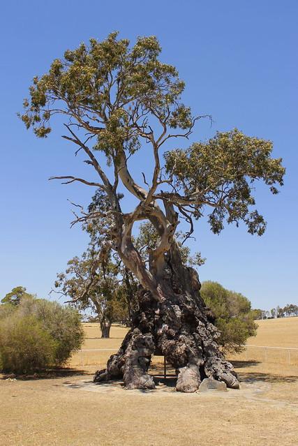 The Herbig Family Tree
