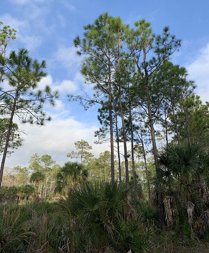 florida gulfcoast springhill naturecoast landscape nature trees