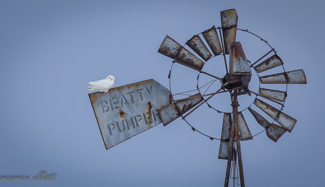 The Beatty Pumper