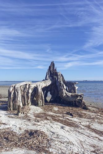 navalliveoaksreservation nature landscape nikon20mm nikond7200 northwestflorida