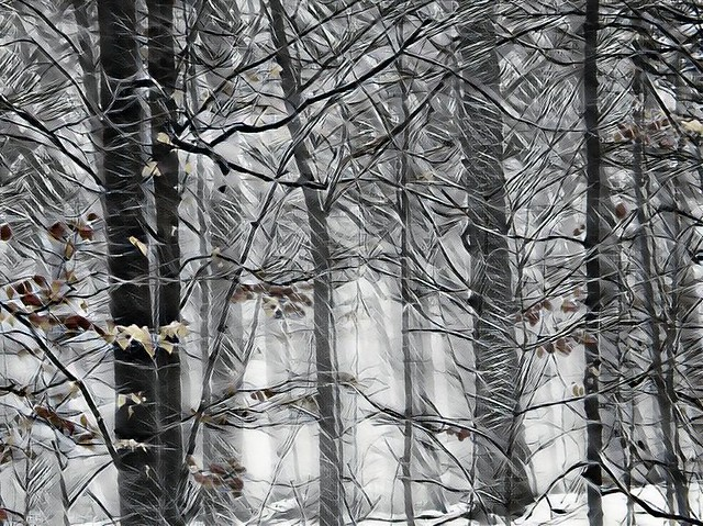 Surrounded by Snowy Trees