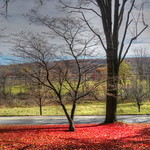 red tree hdr