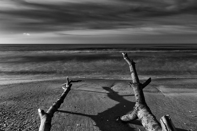 The Baltic Sea. Seashore washed out trees. (Jan 11, 2020)