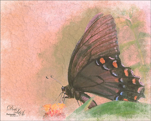 Image of a painted butterfly