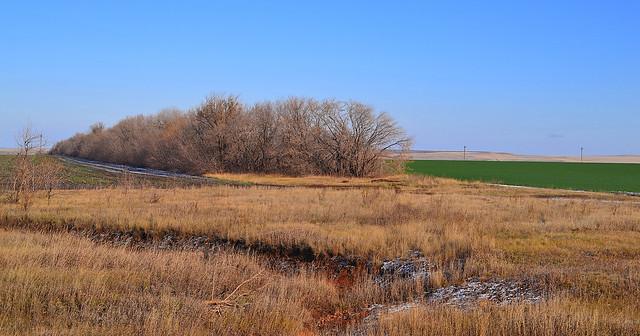 Forest belt in the Orenburg steppe