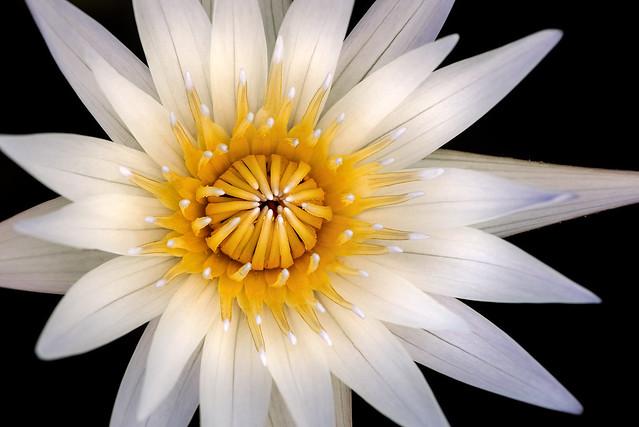 Water Lily Macro 3-0 F LR 9-11-19 J186