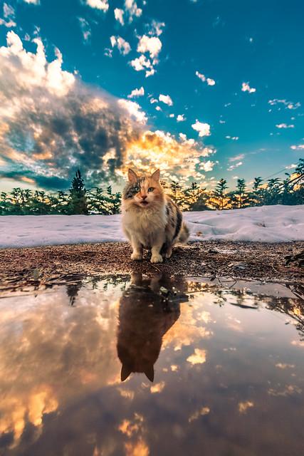 My Aprilis cat reflected at sunset