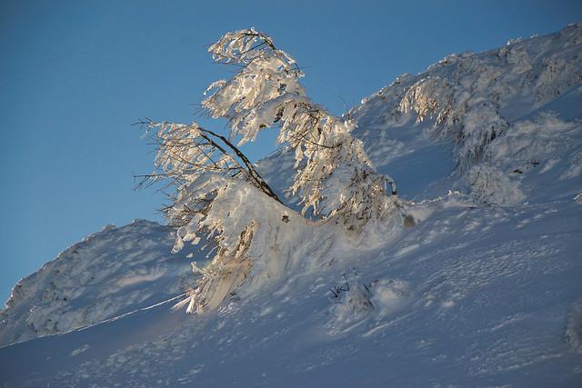 ice, snow and light