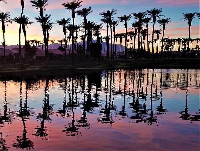 Palm twilight Winter sky