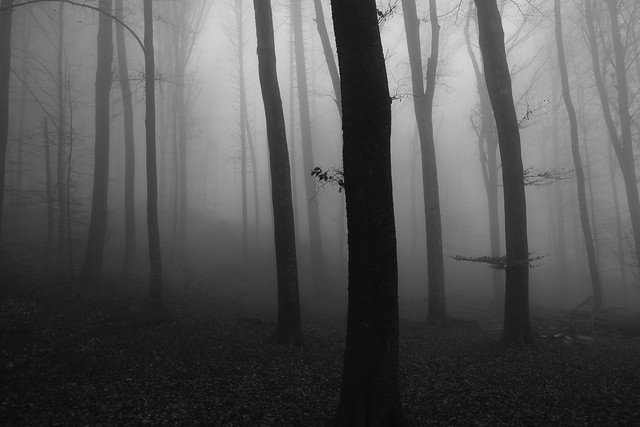 fogmood forest ll