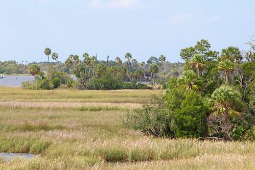 landscape trees river scenery florida palmtrees hammock marsh crystalriver