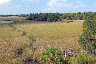 View from Temple Mound, Crystal River Archaeological State Park