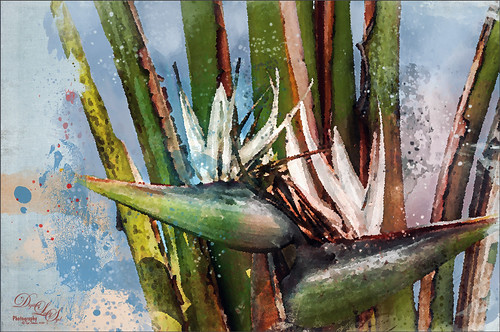 Image of a painted Bird of Paradise plant