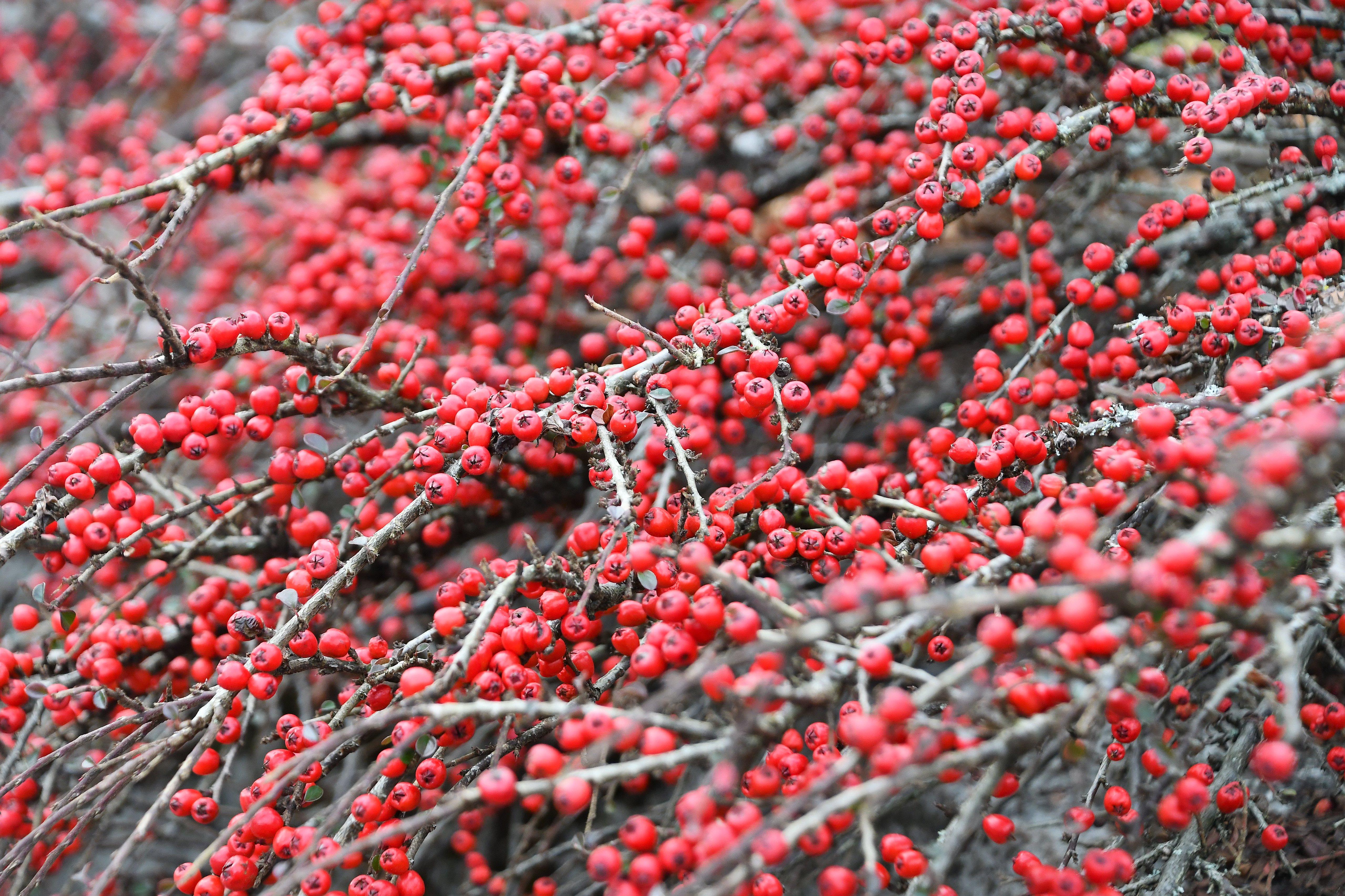 Berries 11.01.2020