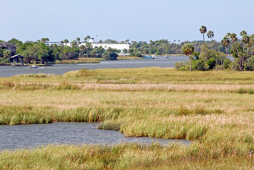 landscape grass river florida palmtrees marsh crystalriver